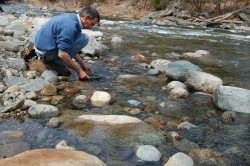 Panning for gold in the wild ammonoosuc river